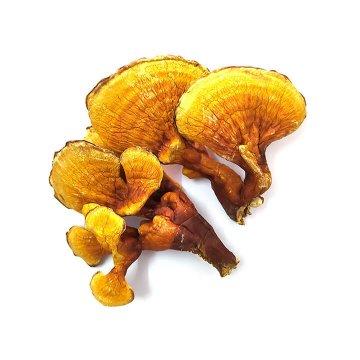 گانودرما زرد